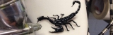 airbrush skorpion auf Fahrradrahmen nrw delbrück lackiert von Daniel Schubert aus Paderborn NRW